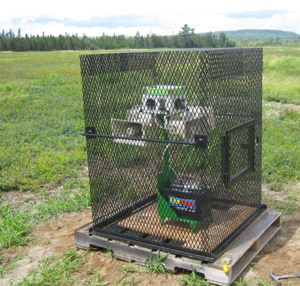 Wetlands Wailer Blueberry version security cage
